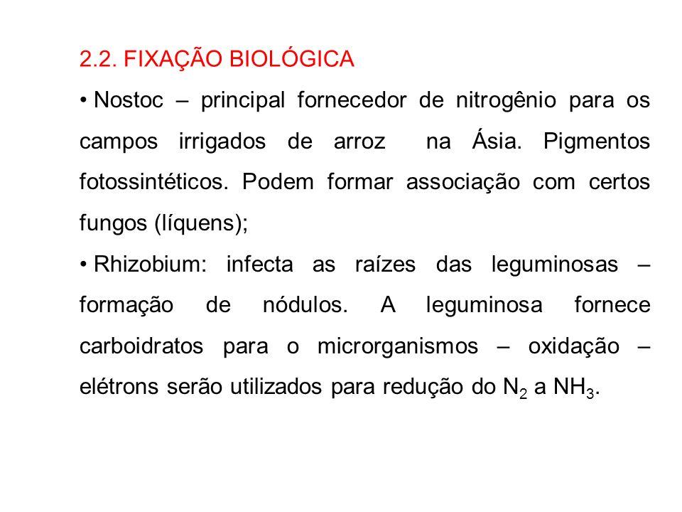 2.2. FIXAÇÃO BIOLÓGICA Nostoc – principal fornecedor de nitrogênio para os campos irrigados de arroz na Ásia. Pigmentos fotossintéticos. Podem formar