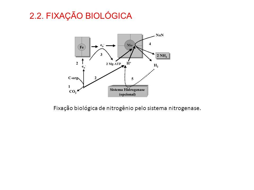 2.2. FIXAÇÃO BIOLÓGICA Fixação biológica de nitrogênio pelo sistema nitrogenase.