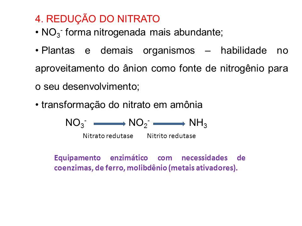 4. REDUÇÃO DO NITRATO NO 3 - forma nitrogenada mais abundante; Plantas e demais organismos – habilidade no aproveitamento do ânion como fonte de nitro