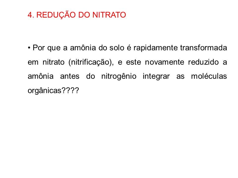 4. REDUÇÃO DO NITRATO Por que a amônia do solo é rapidamente transformada em nitrato (nitrificação), e este novamente reduzido a amônia antes do nitro