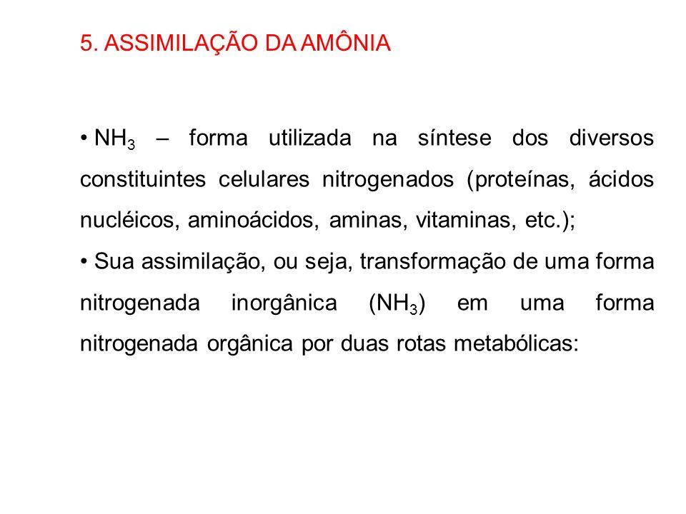 5. ASSIMILAÇÃO DA AMÔNIA NH 3 – forma utilizada na síntese dos diversos constituintes celulares nitrogenados (proteínas, ácidos nucléicos, aminoácidos