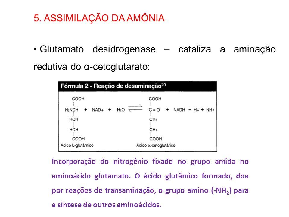 5. ASSIMILAÇÃO DA AMÔNIA Glutamato desidrogenase – cataliza a aminação redutiva do α-cetoglutarato: Incorporação do nitrogênio fixado no grupo amida n