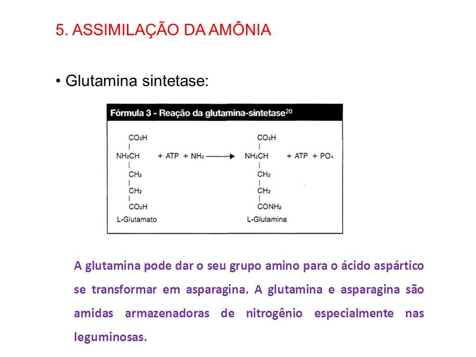 5. ASSIMILAÇÃO DA AMÔNIA Glutamina sintetase: A glutamina pode dar o seu grupo amino para o ácido aspártico se transformar em asparagina. A glutamina