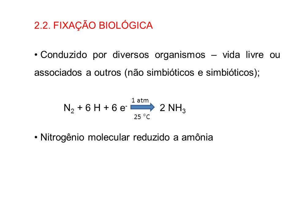 2.2. FIXAÇÃO BIOLÓGICA Conduzido por diversos organismos – vida livre ou associados a outros (não simbióticos e simbióticos); N 2 + 6 H + 6 e - 2 NH 3