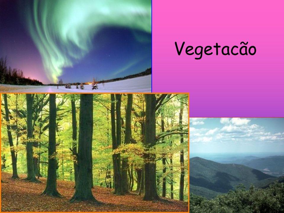 Vegetacão