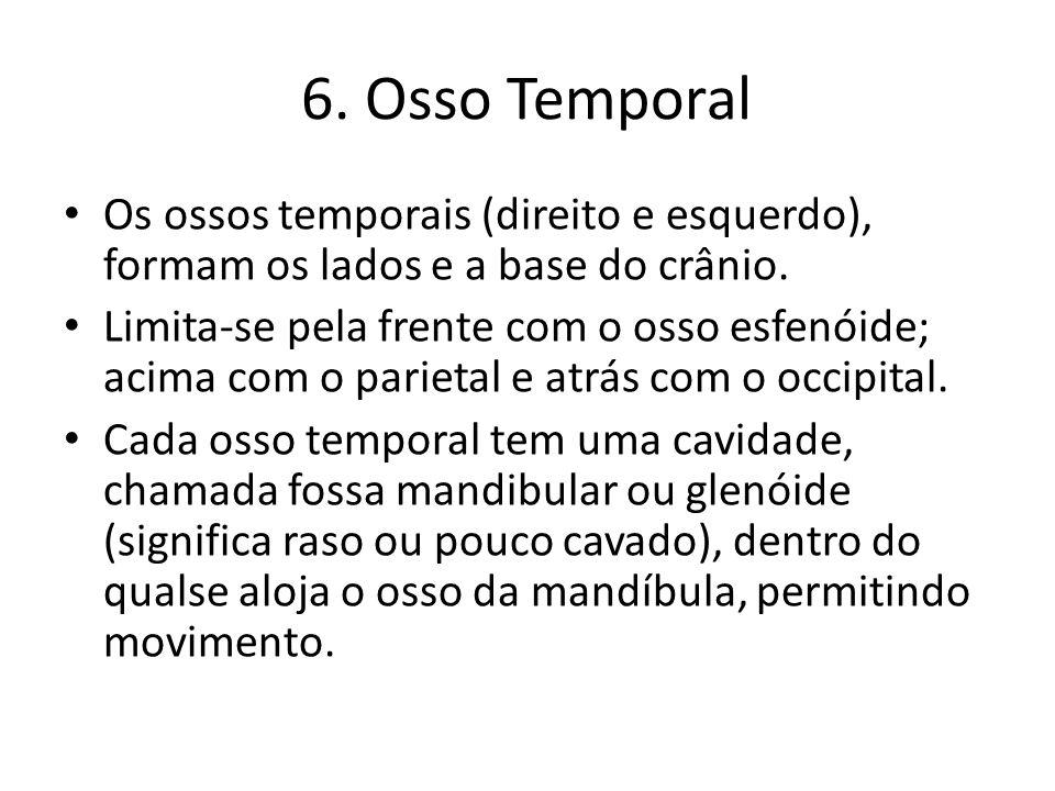 6. Osso Temporal Os ossos temporais (direito e esquerdo), formam os lados e a base do crânio. Limita-se pela frente com o osso esfenóide; acima com o