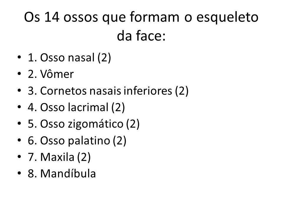 Os 14 ossos que formam o esqueleto da face: 1. Osso nasal (2) 2. Vômer 3. Cornetos nasais inferiores (2) 4. Osso lacrimal (2) 5. Osso zigomático (2) 6