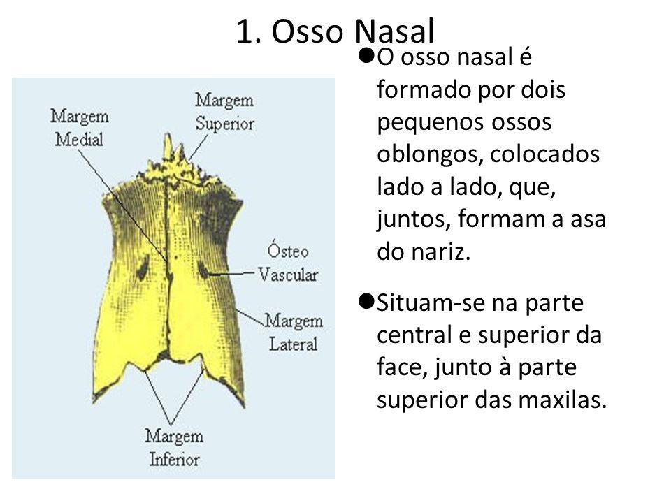 1. Osso Nasal O osso nasal é formado por dois pequenos ossos oblongos, colocados lado a lado, que, juntos, formam a asa do nariz. Situam-se na parte c