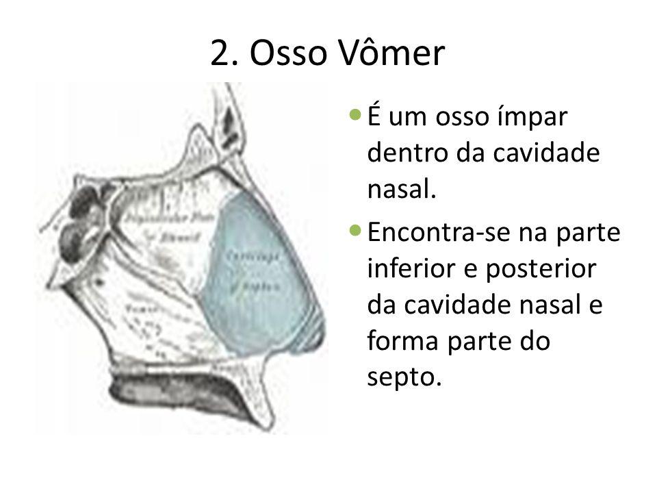 2. Osso Vômer É um osso ímpar dentro da cavidade nasal. Encontra-se na parte inferior e posterior da cavidade nasal e forma parte do septo.