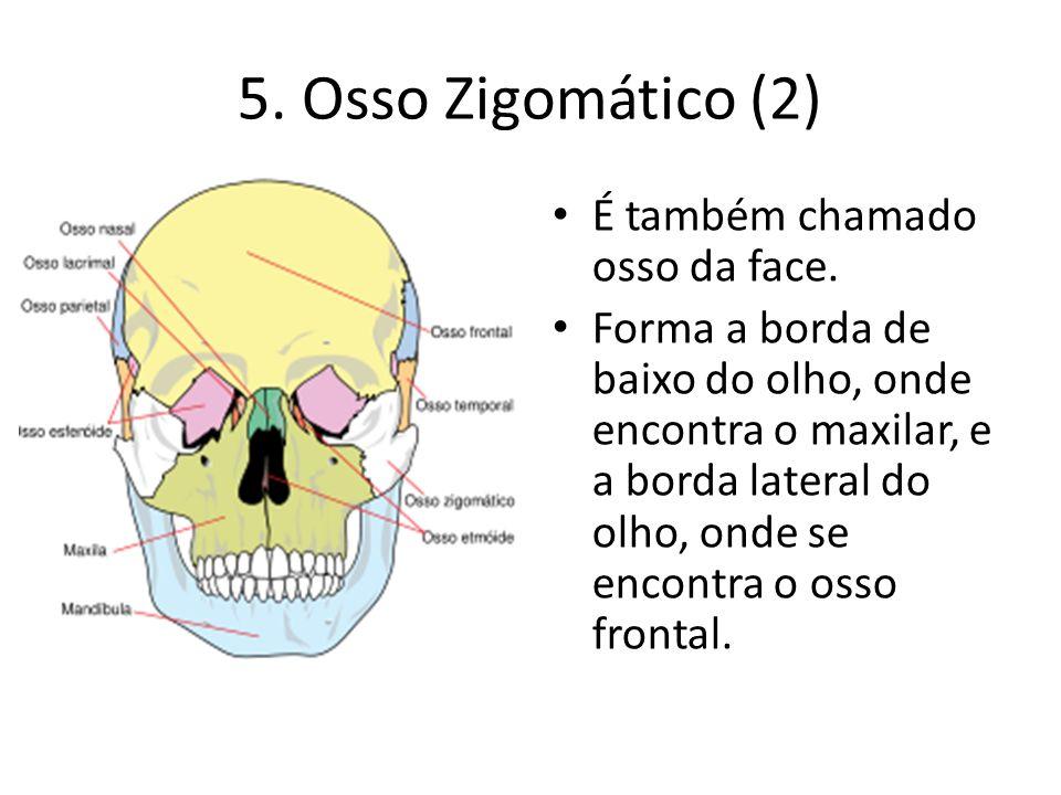 5. Osso Zigomático (2) É também chamado osso da face. Forma a borda de baixo do olho, onde encontra o maxilar, e a borda lateral do olho, onde se enco