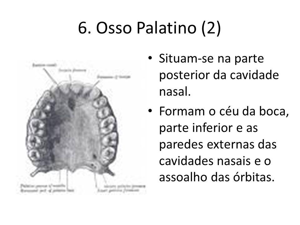 6. Osso Palatino (2) Situam-se na parte posterior da cavidade nasal. Formam o céu da boca, parte inferior e as paredes externas das cavidades nasais e