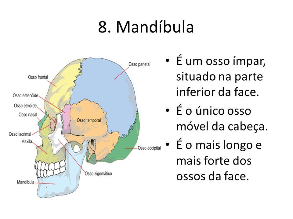 8. Mandíbula É um osso ímpar, situado na parte inferior da face. É o único osso móvel da cabeça. É o mais longo e mais forte dos ossos da face.