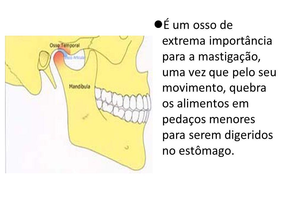 É um osso de extrema importância para a mastigação, uma vez que pelo seu movimento, quebra os alimentos em pedaços menores para serem digeridos no est
