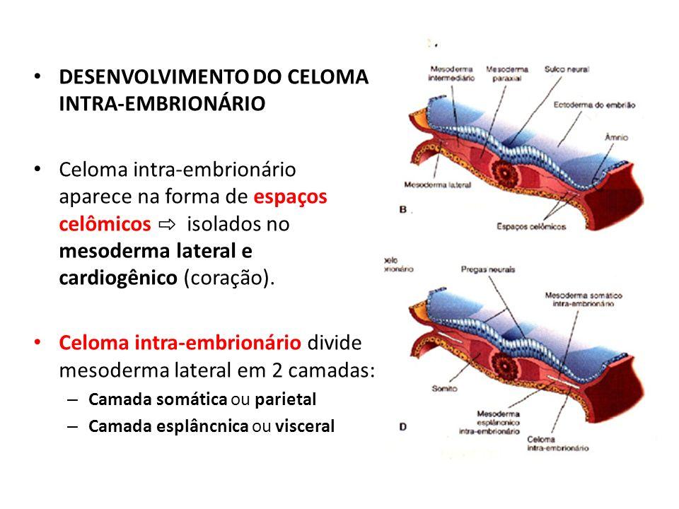 DESENVOLVIMENTO DO CELOMA INTRA-EMBRIONÁRIO Celoma intra-embrionário aparece na forma de espaços celômicos isolados no mesoderma lateral e cardiogênic