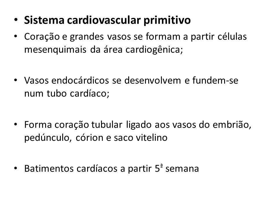 Sistema cardiovascular primitivo Coração e grandes vasos se formam a partir células mesenquimais da área cardiogênica; Vasos endocárdicos se desenvolv