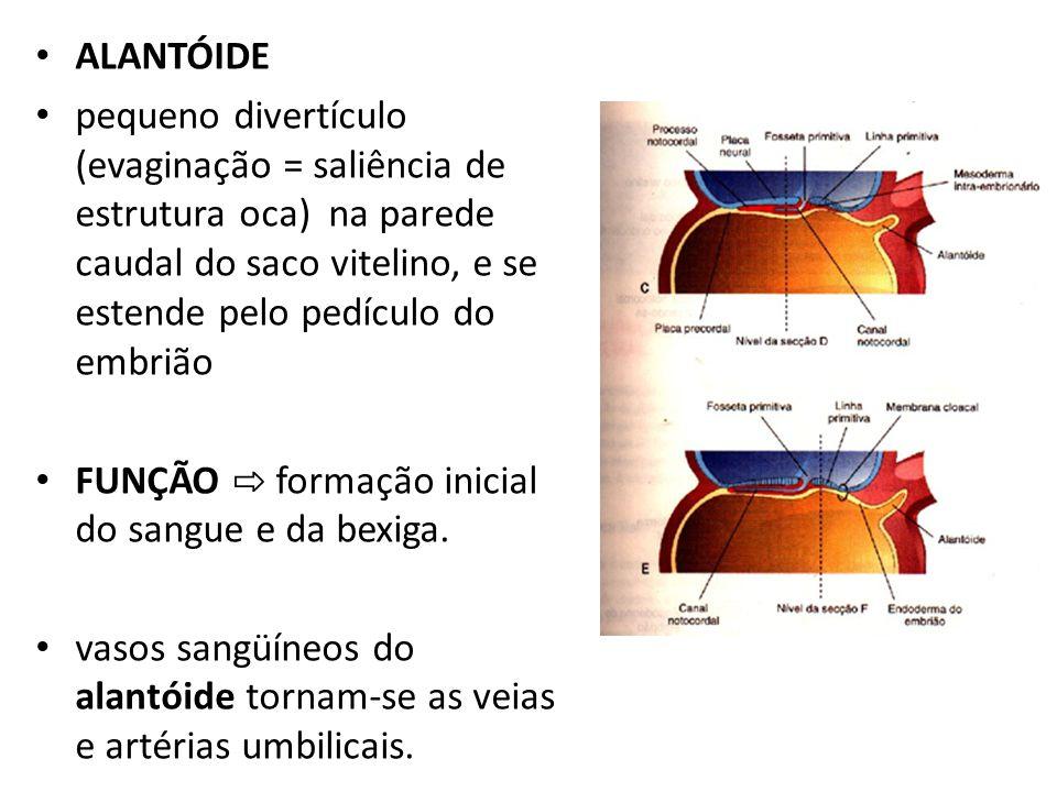 ALANTÓIDE pequeno divertículo (evaginação = saliência de estrutura oca) na parede caudal do saco vitelino, e se estende pelo pedículo do embrião FUNÇÃ
