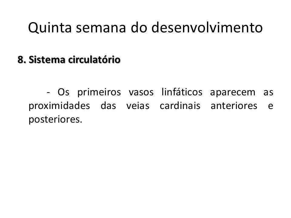 8. Sistema circulatório - Os primeiros vasos linfáticos aparecem as proximidades das veias cardinais anteriores e posteriores. Quinta semana do desenv