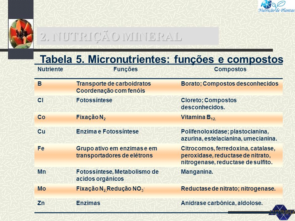 Tabela 5. Micronutrientes: funções e compostos NutrienteFunçõesCompostos BTransporte de carboidratos Coordenação com fenóis Borato; Compostos desconhe