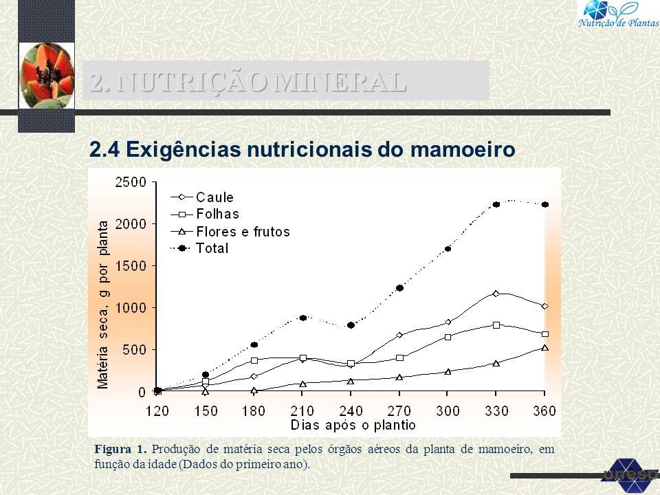 2.4 Exigências nutricionais do mamoeiro Figura 1. Produção de matéria seca pelos órgãos aéreos da planta de mamoeiro, em função da idade (Dados do pri