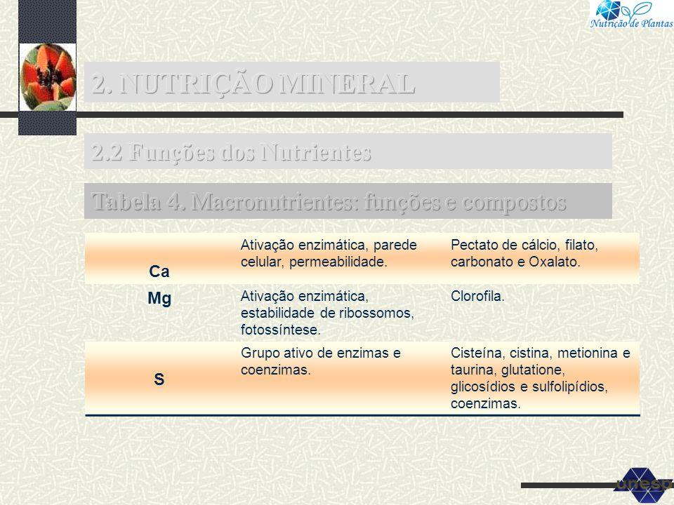 Ca Ativação enzimática, parede celular, permeabilidade. Pectato de cálcio, filato, carbonato e Oxalato. Mg Ativação enzimática, estabilidade de riboss