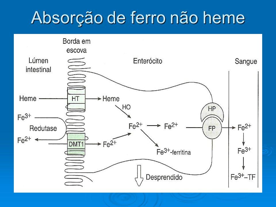 Etapas 1.O ferro chega sob a forma de Fe 3+ e é reduzido a Fe 2+ pela ação da ferri redutase 2.