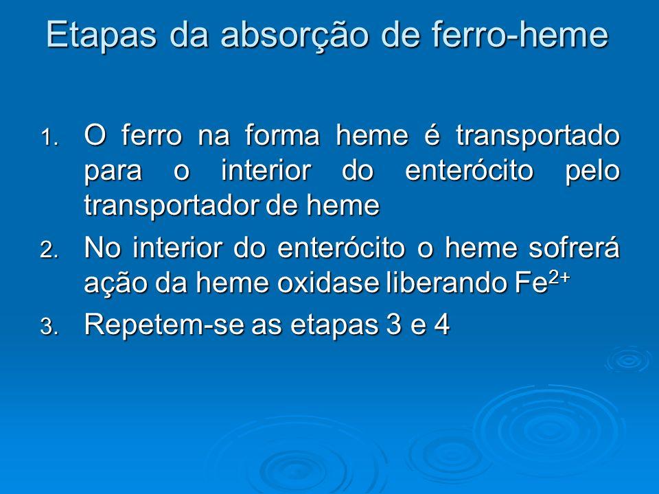 Etapas da absorção de ferro-heme 1. O ferro na forma heme é transportado para o interior do enterócito pelo transportador de heme 2. No interior do en