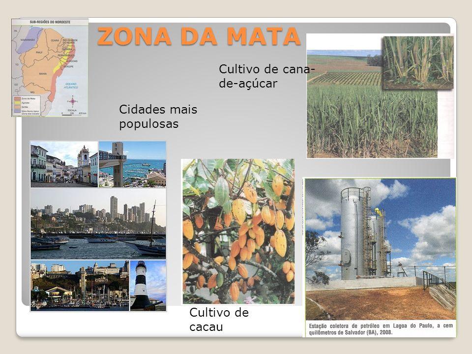 ZONA DA MATA Cultivo de cacau Cultivo de cana- de-açúcar Cidades mais populosas