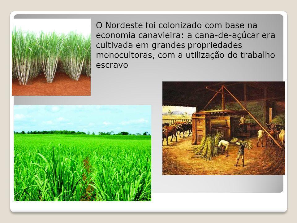 A ocupação colonial, voltada somente para o enriquecimento de Portugal, deixou no Nordeste características marcantes, como a pouca vegetação original ( a Mata Atlântica)