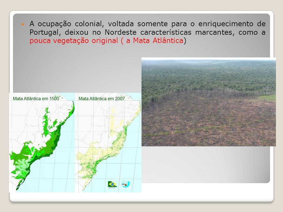 A ocupação colonial, voltada somente para o enriquecimento de Portugal, deixou no Nordeste características marcantes, como a pouca vegetação original