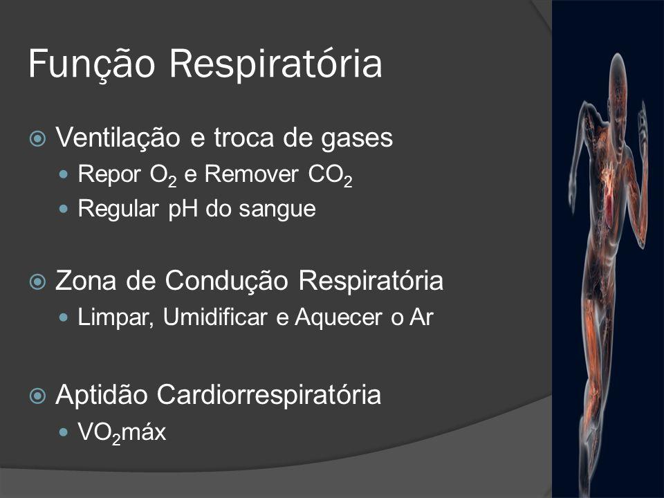 Função Respiratória Ventilação e troca de gases Repor O 2 e Remover CO 2 Regular pH do sangue Zona de Condução Respiratória Limpar, Umidificar e Aquec