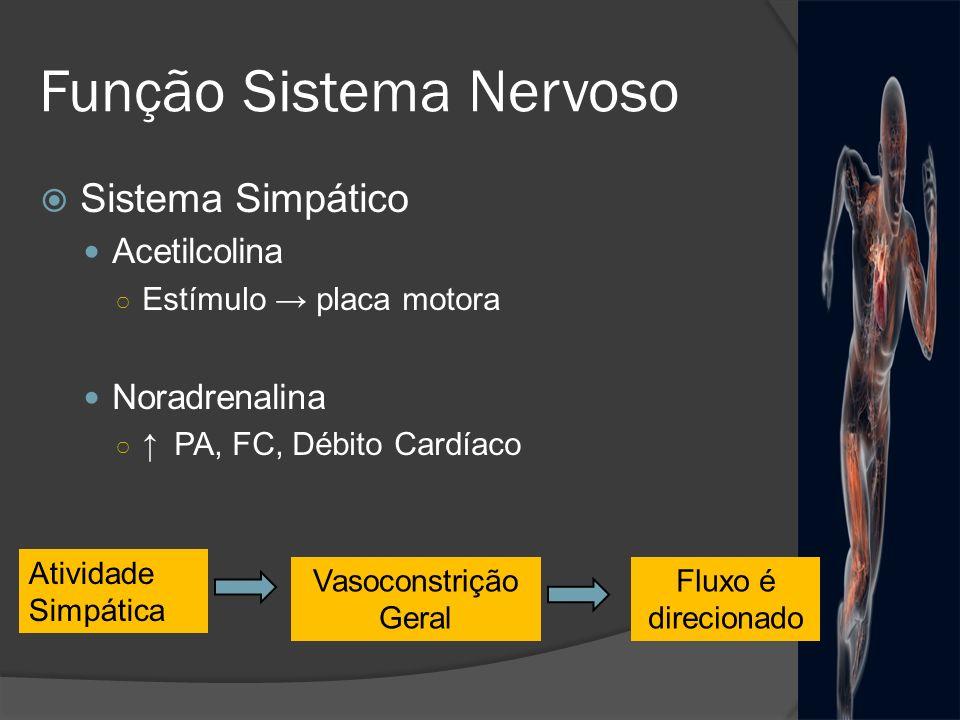 Função Sistema Nervoso Sistema Simpático Acetilcolina Estímulo placa motora Noradrenalina PA, FC, Débito Cardíaco Atividade Simpática Vasoconstrição G