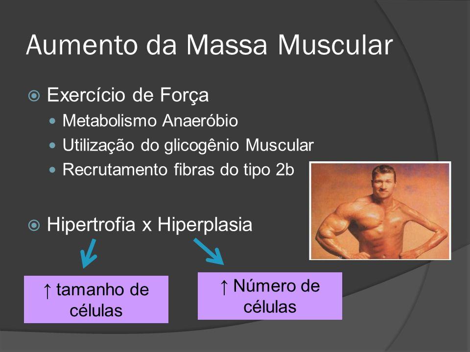 Aumento da Massa Muscular Exercício de Força Metabolismo Anaeróbio Utilização do glicogênio Muscular Recrutamento fibras do tipo 2b Hipertrofia x Hipe