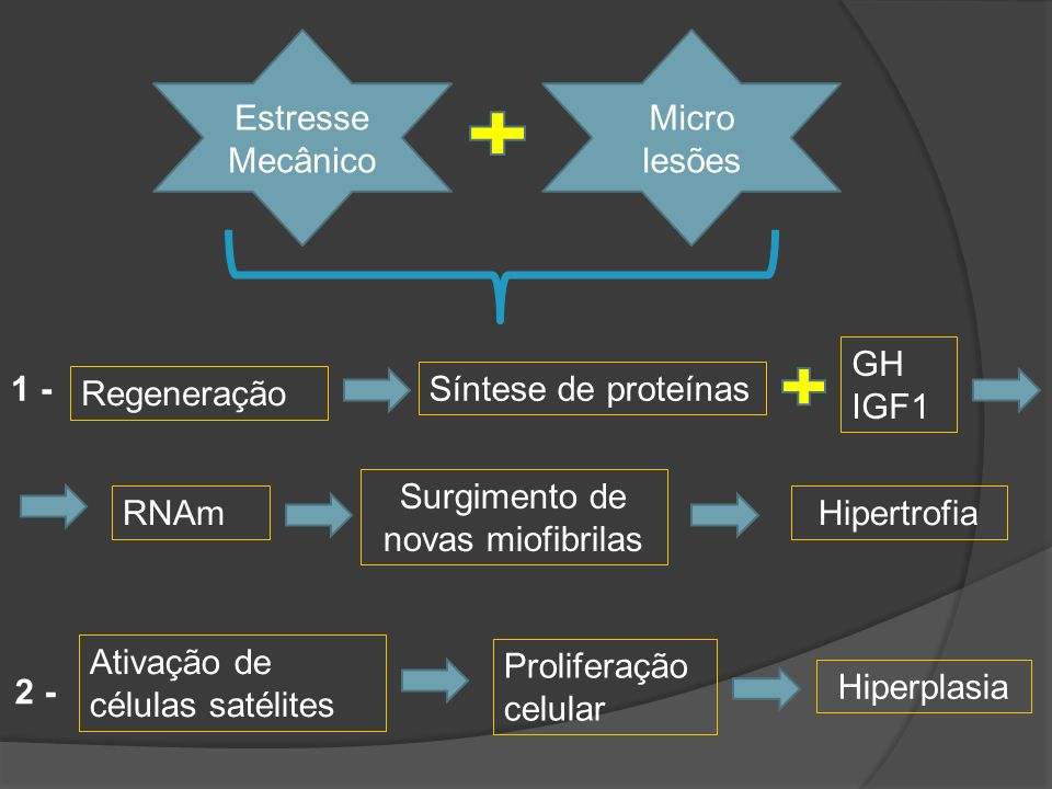 Estresse Mecânico Micro lesões Síntese de proteínas Regeneração RNAm Surgimento de novas miofibrilas Hipertrofia GH IGF1 Ativação de células satélites