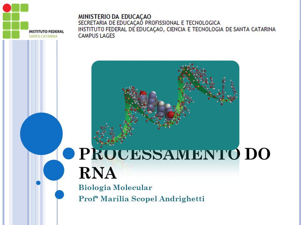 PROCESSAMENTO DO RNA Biologia Molecular Profª Marília Scopel Andrighetti