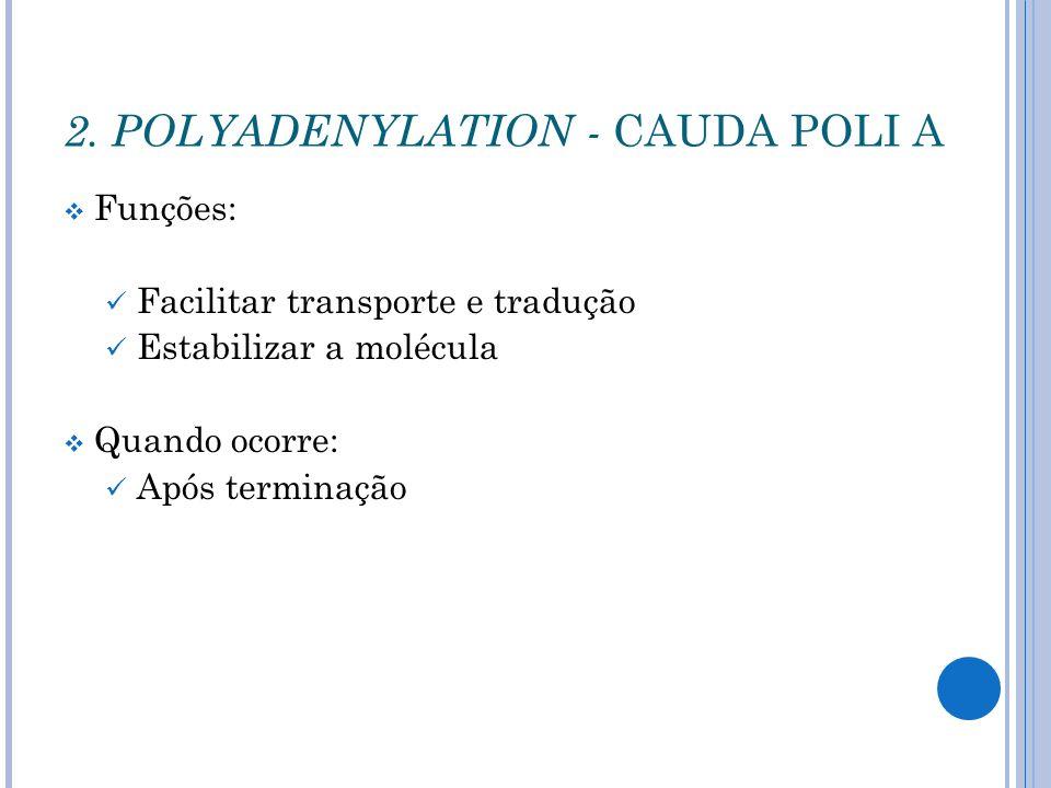 Funções: Facilitar transporte e tradução Estabilizar a molécula Quando ocorre: Após terminação 2. POLYADENYLATION - CAUDA POLI A