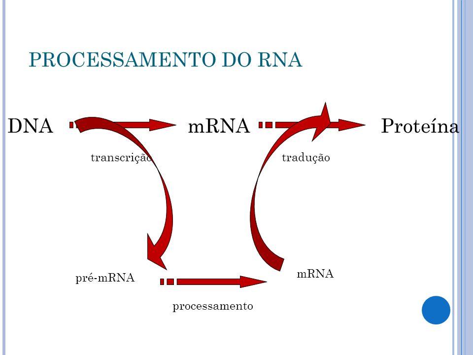 mRNAProteína pré-mRNA mRNA DNA traduçãotranscrição processamento PROCESSAMENTO DO RNA
