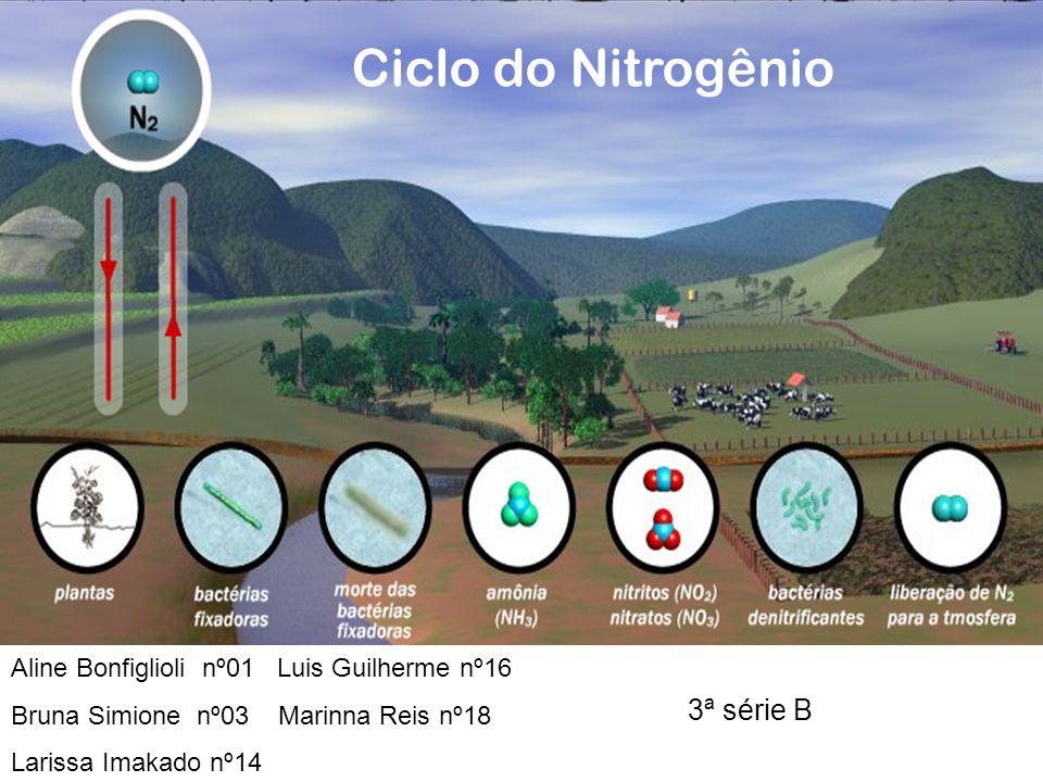 Ciclo do Nitrogênio Aline Bonfiglioli nº01 Luis Guilherme nº16 Bruna Simione nº03 Marinna Reis nº18 Larissa Imakado nº14 3ª série B