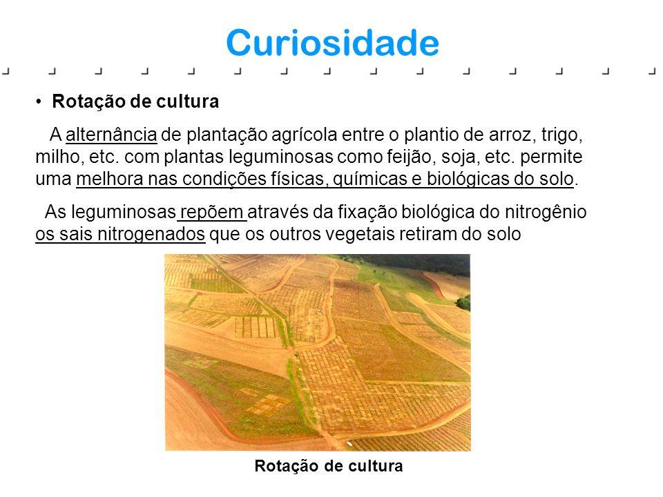 Curiosidade Rotação de cultura A alternância de plantação agrícola entre o plantio de arroz, trigo, milho, etc. com plantas leguminosas como feijão, s