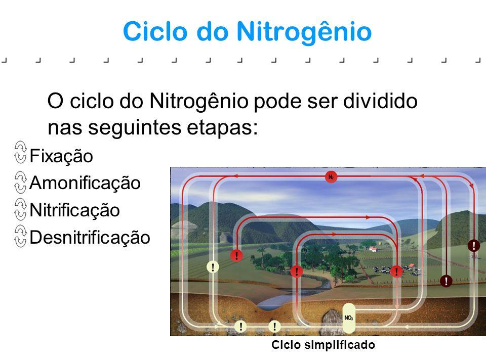 Ciclo do Nitrogênio O ciclo do Nitrogênio pode ser dividido nas seguintes etapas: Fixação Amonificação Nitrificação Desnitrificação Ciclo simplificado