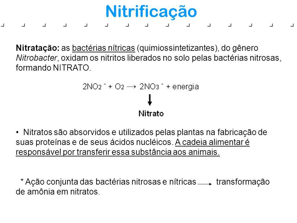 Nitrificação Nitratação: as bactérias nítricas (quimiossintetizantes), do gênero Nitrobacter, oxidam os nitritos liberados no solo pelas bactérias nit