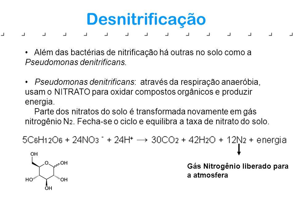 Desnitrificação Além das bactérias de nitrificação há outras no solo como a Pseudomonas denitrificans. Pseudomonas denitrificans: através da respiraçã