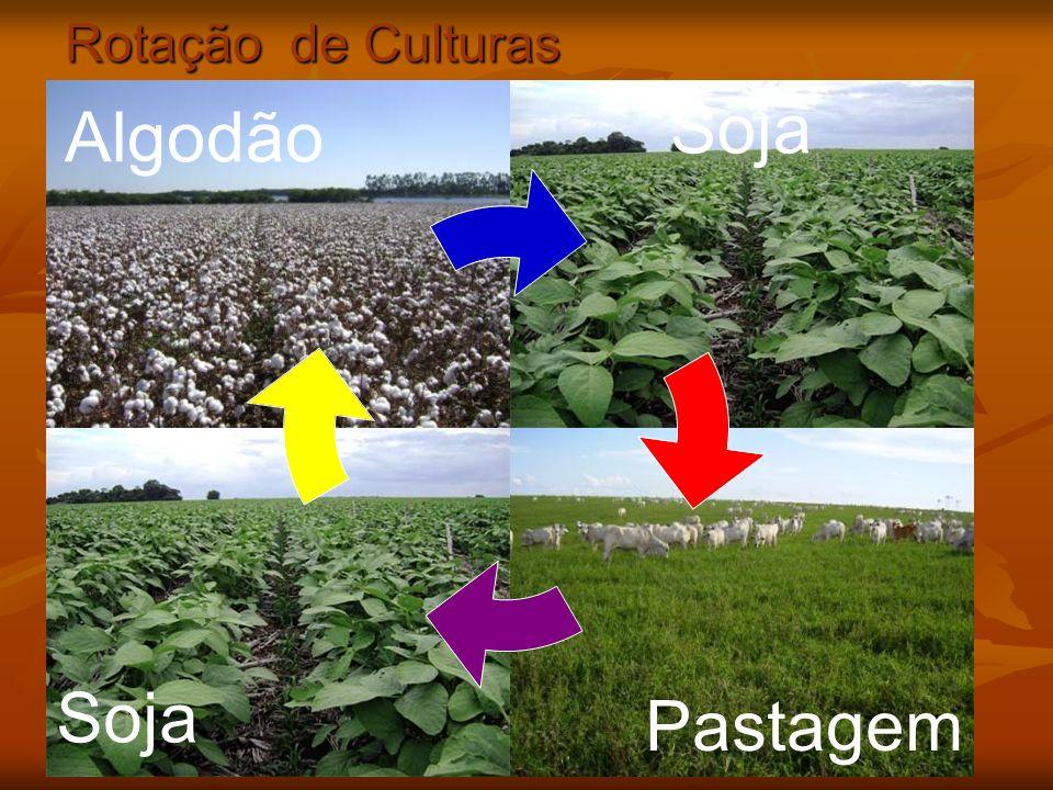 Rotação de Culturas Algodão Soja Pastagem Soja