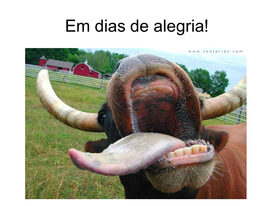 Pastor cara de vaca é mais ou menos isso ai! Não reage a nenhum estímulo.