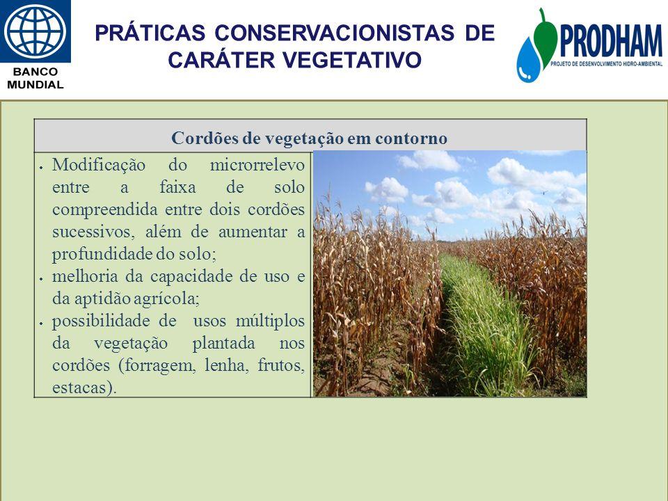 Cordões de vegetação em contorno Modificação do microrrelevo entre a faixa de solo compreendida entre dois cordões sucessivos, além de aumentar a prof