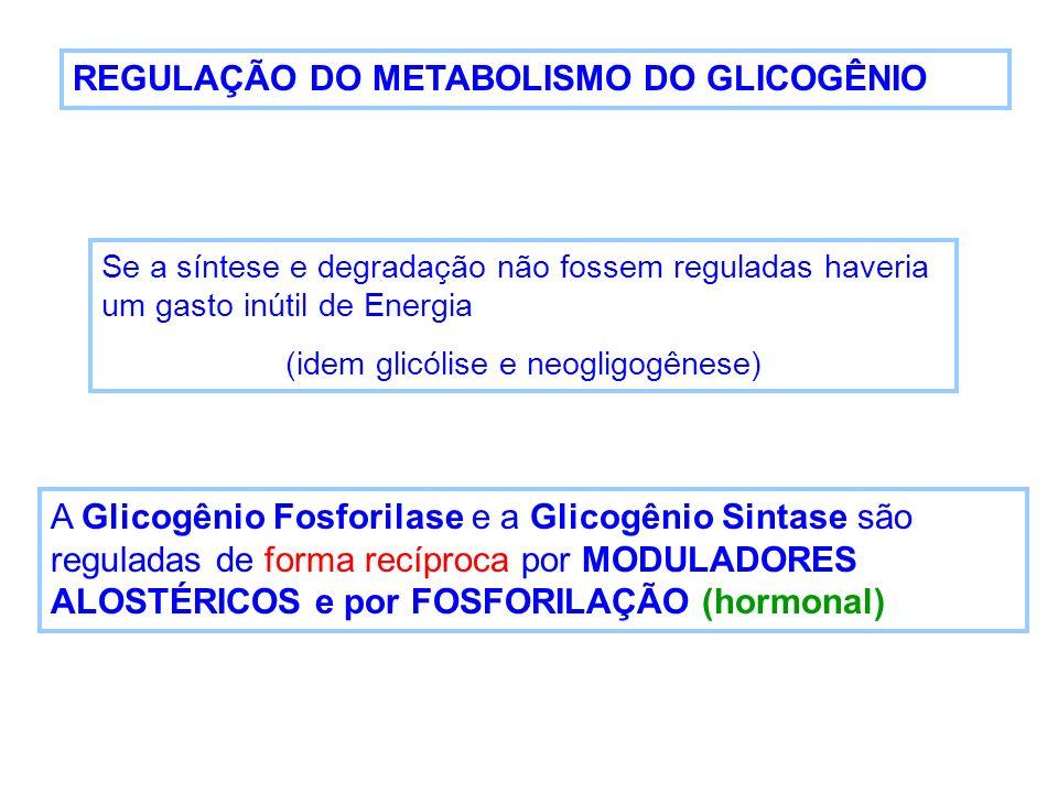 REGULAÇÃO DO METABOLISMO DO GLICOGÊNIO Se a síntese e degradação não fossem reguladas haveria um gasto inútil de Energia (idem glicólise e neogligogên