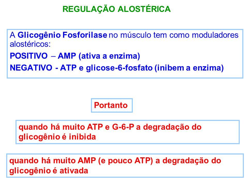 A Glicogênio Fosforilase no músculo tem como moduladores alostéricos: POSITIVO – AMP (ativa a enzima) NEGATIVO - ATP e glicose-6-fosfato (inibem a enz