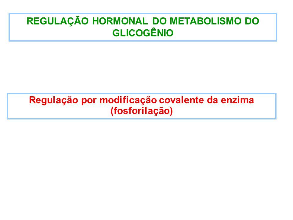 REGULAÇÃO HORMONAL DO METABOLISMO DO GLICOGÊNIO Regulação por modificação covalente da enzima (fosforilação)