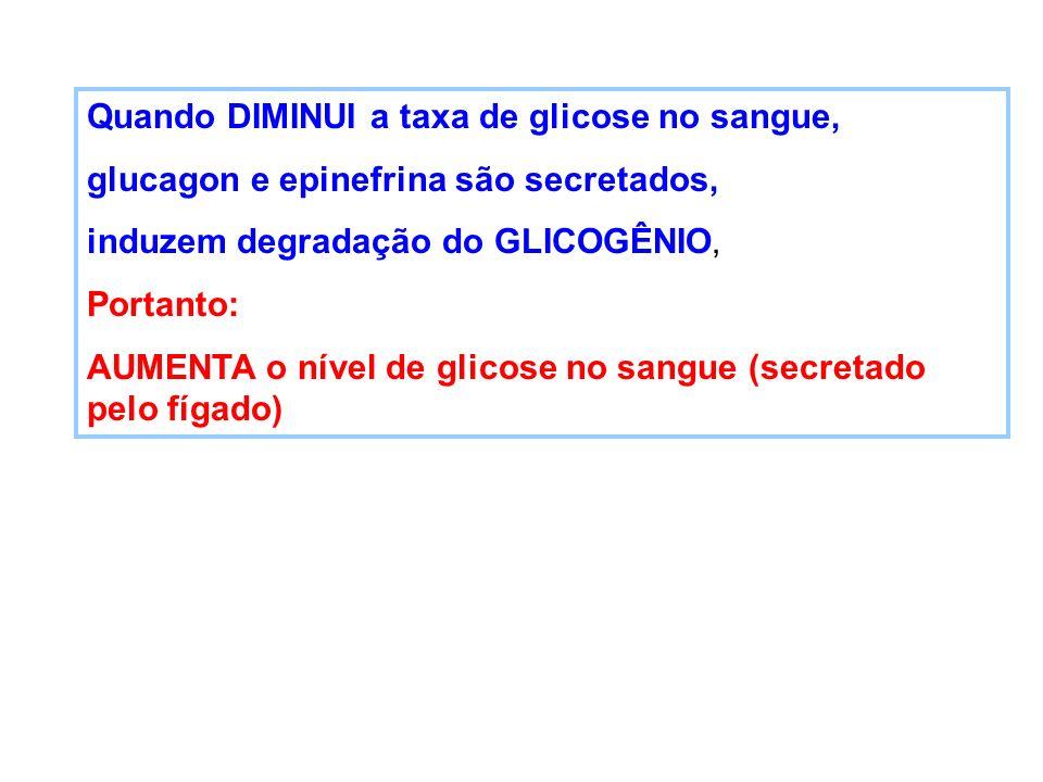 Quando DIMINUI a taxa de glicose no sangue, glucagon e epinefrina são secretados, induzem degradação do GLICOGÊNIO, Portanto: AUMENTA o nível de glico