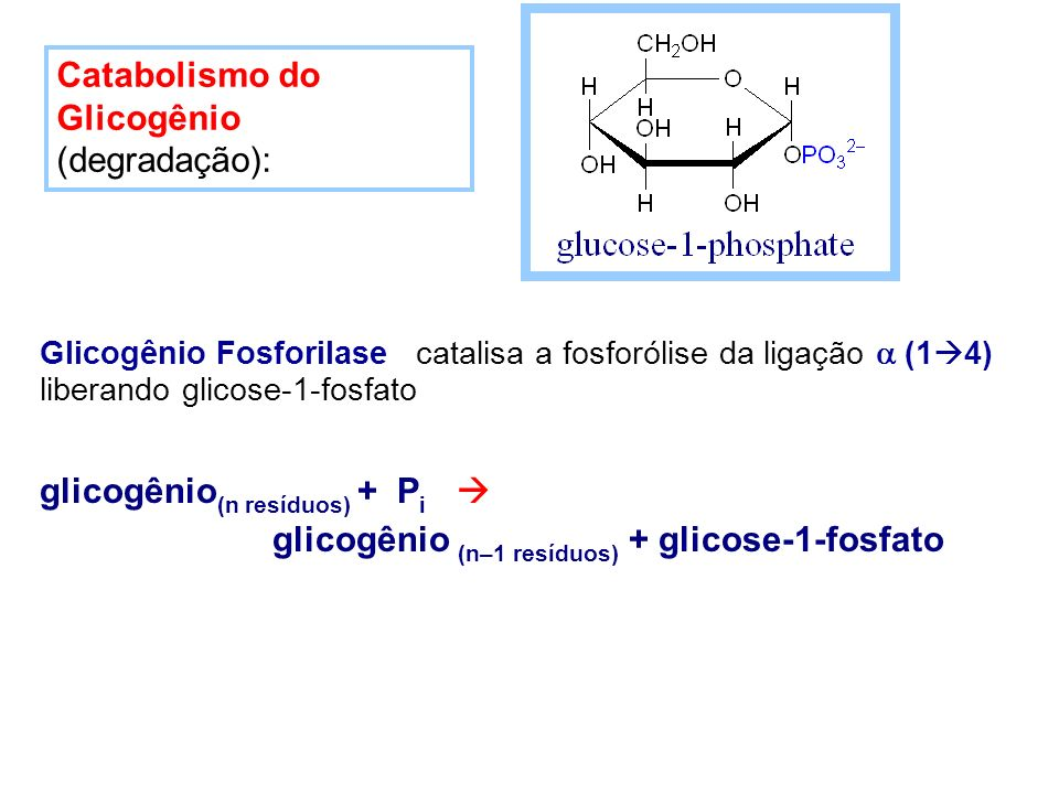 Glicogênio Fosforilase catalisa a fosforólise da ligação (1 4) liberando glicose-1-fosfato glicogênio (n resíduos) + P i glicogênio (n–1 resíduos) + g