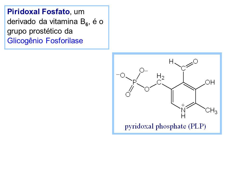 Piridoxal Fosfato, um derivado da vitamina B 6, é o grupo prostético da Glicogênio Fosforilase
